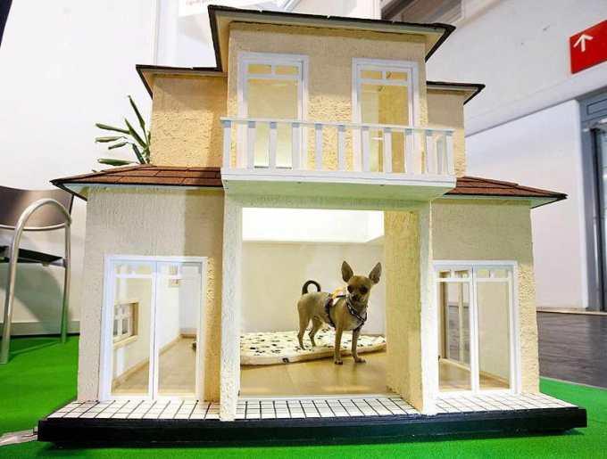 Chihuahua Dog Houses