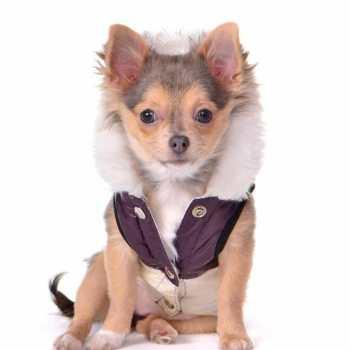 Chihuahua Dog Sweaters