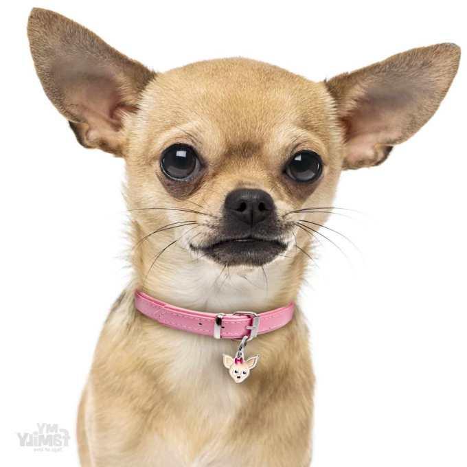 Chihuahua Dog Tags