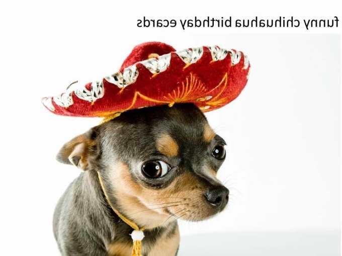 Chihuahua Ecard