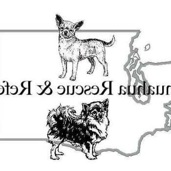 Chihuahua Rescue Seattle