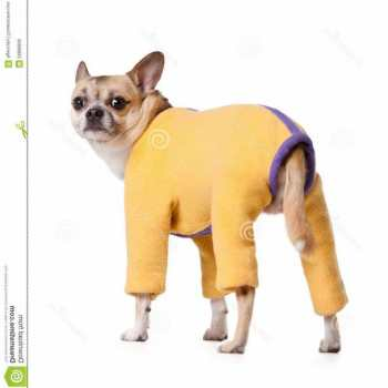 Chihuahua Snow Suit
