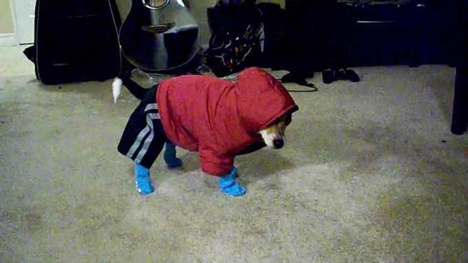 Chihuahua Snowsuits