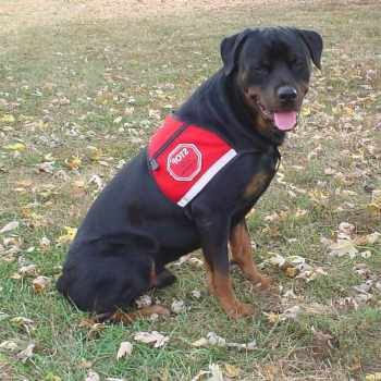 Can A Rottweiler Be A Service Dog