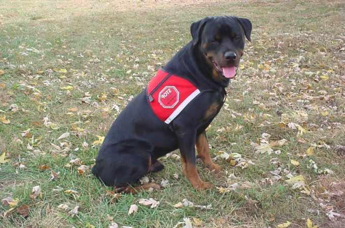 Can A Rottweiler Be A Service Dog