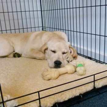 Dog Kennel For Labrador