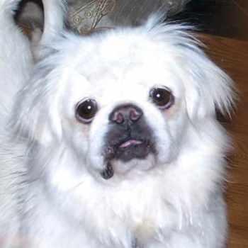 Colorado Pomeranian Rescue