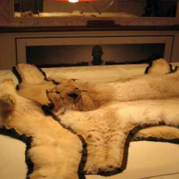 Craigslist Wheaten Terrier