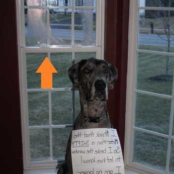 Dog Door Great Dane