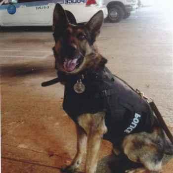 Donate German Shepherd To Police