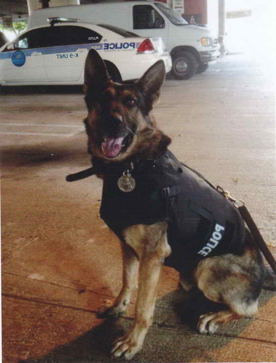 Donate German Shepherd To Police