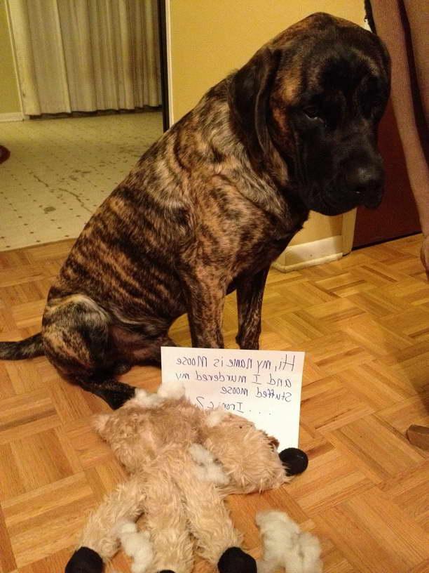 English Mastiff Stuffed Animals