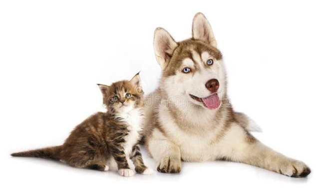 Craigslist Maine Free Pets | Bruin Blog
