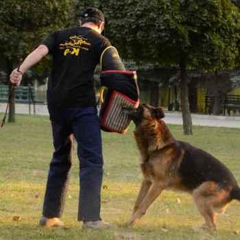 German Shepherd Bite Training