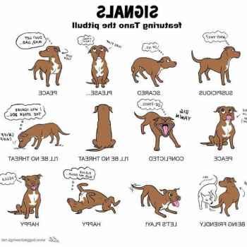 German Shepherd Body Language
