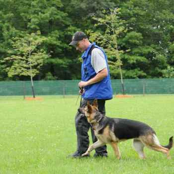 German Shepherd Boot Camp