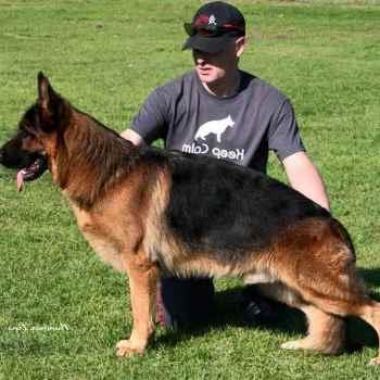 German Shepherd Breeders California