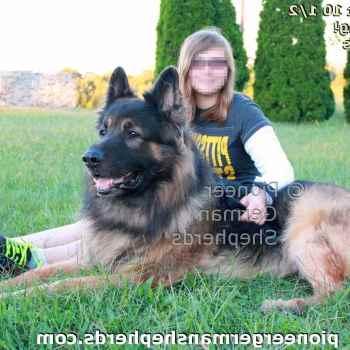 German Shepherd Breeders Pittsburgh Pa