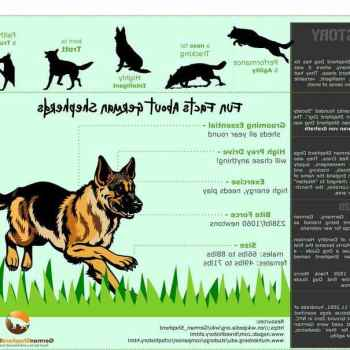 German Shepherd Care Facts