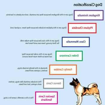 German Shepherd Classification