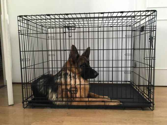 German Shepherd Crate Size
