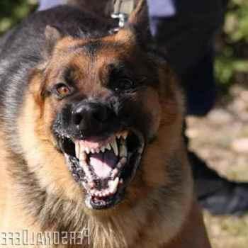 German Shepherd Defense Training