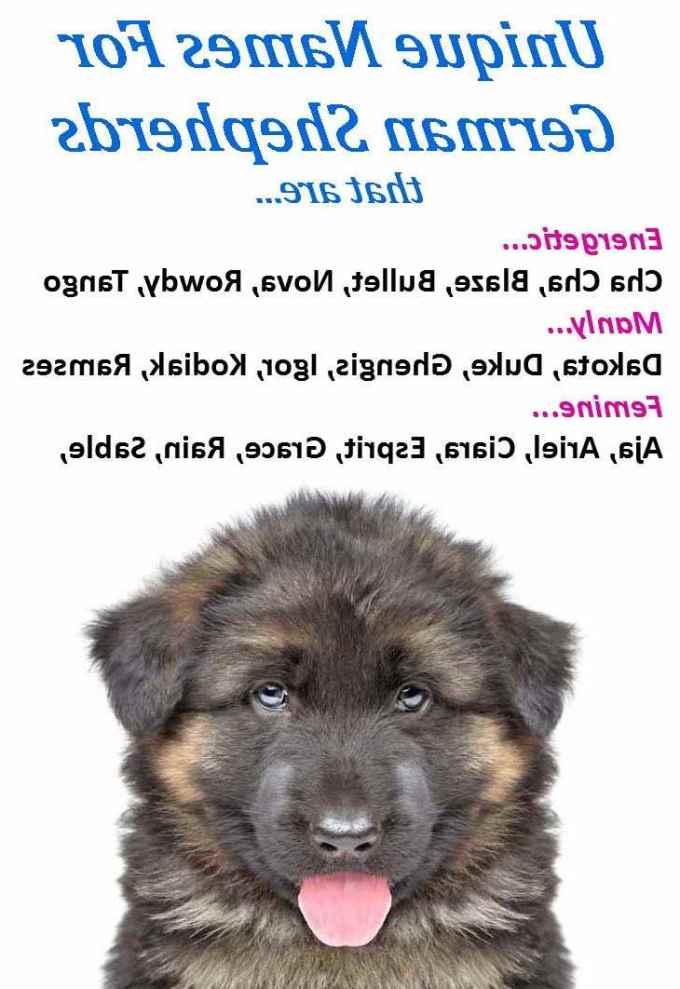 German Shepherd Dog Names Female