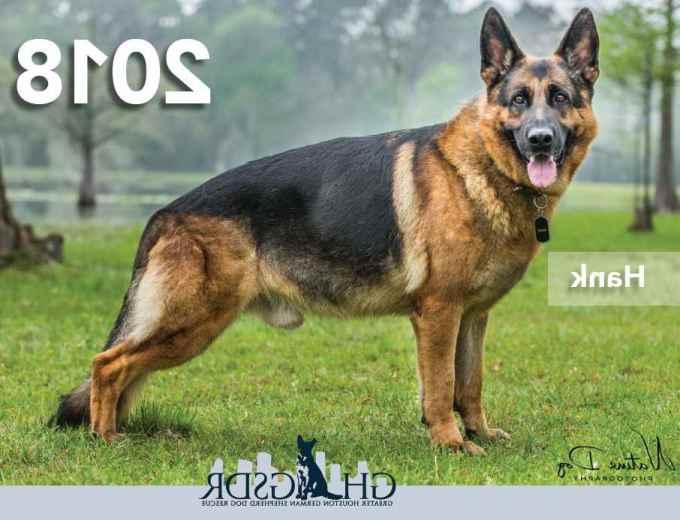 German Shepherd Dog Rescue Houston