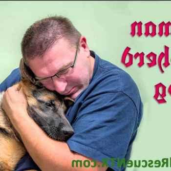 German Shepherd Dog Rescue Of North Texas Inc