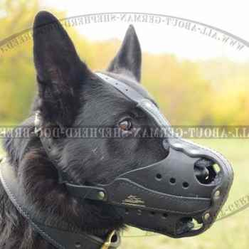 German Shepherd Equipment