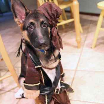 German Shepherd Halloween Costume Ideas