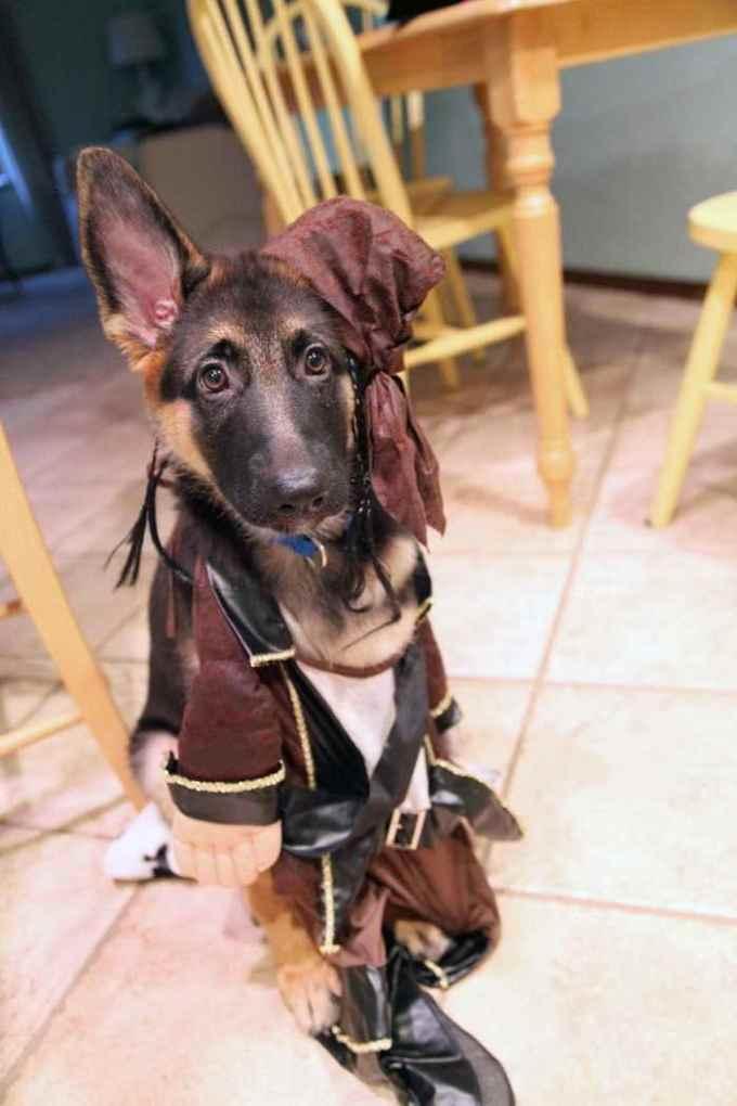 German Shepherd Halloween Costume Ideas