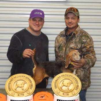 Deep South Beagle Gundog Federation