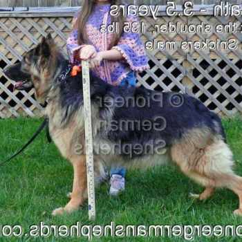 German Shepherd Items For Sale