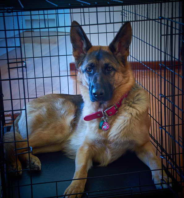 German Shepherd Kennel Size