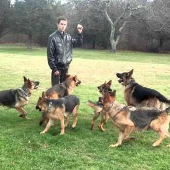 German Shepherd Kennels