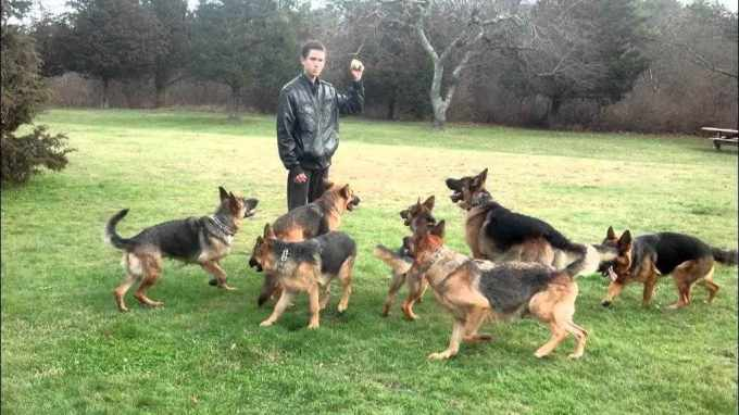 German Shepherd Kennels