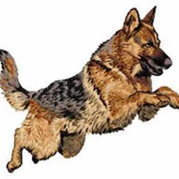 German Shepherd Patch