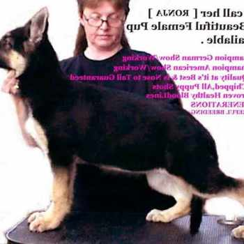 German Shepherd Puppies For Sale In Northwest Indiana