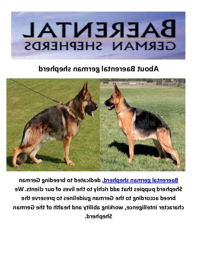German Shepherd Puppies For Sale In Texas Cheap