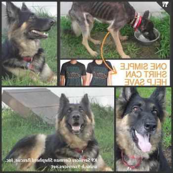 German Shepherd Rescue Inc