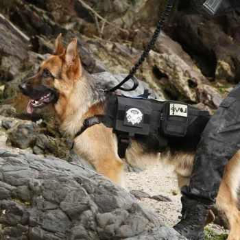 German Shepherd Tactical Vest