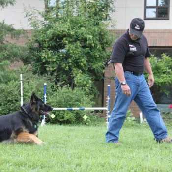 German Shepherd Training San Jose