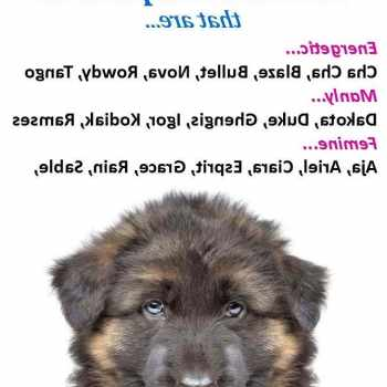 Girl Dog Names German Shepherd