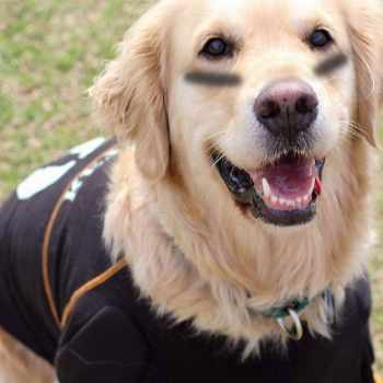 Golden Retriever Costume Ideas