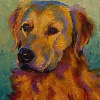 Golden Retriever Paintings