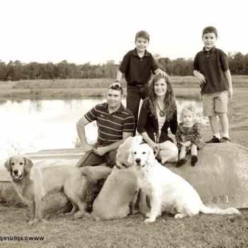 Golden Retriever Puppies Lafayette La