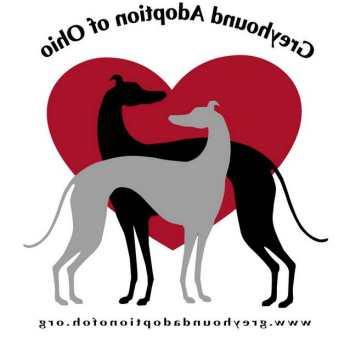 Greyhound Dog Rescue Ohio