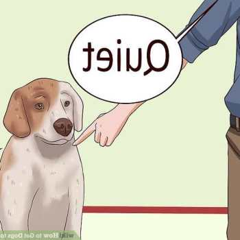 How To Get My Chihuahua To Stop Barking