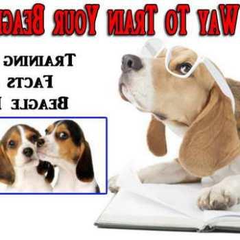 How To Train A Beagle